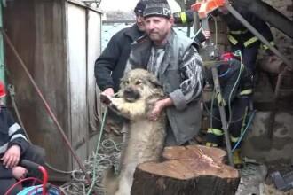 Un cățel a fost recuperat dintr-o fântână de 13 metri, în Târgu Mureș