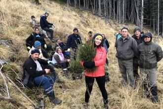 O româncă emigrată în Marea Britanie a plantat 15.000 de copaci în Munții Făgăraș