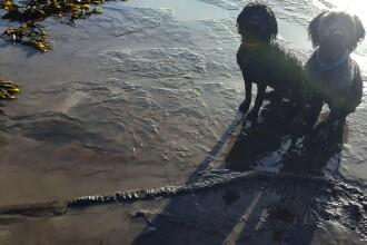 Descoperire istorică pe plajă. Ce era de fapt osul dezgropat de doi câini