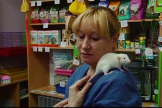 Motivul pentru care rușii dau năvală în magazinele de animale să cumpere șobolani.