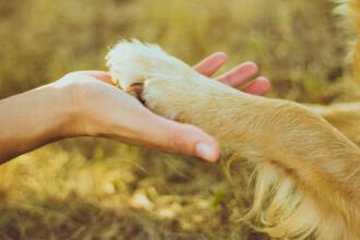 Gestul inedit pe care îl face un câine pentru stăpânul său. Filmulețul a devenit viral
