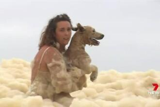 O cătelușă a fost salvată din spuma oceanică, în timpul unei transmisiuni pentru un post de știri