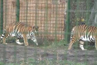 """Animalele de la Grădina Zoologică din Ploiești au fost vizitate de Moș Crăciun: """"Au și ele dreptul să se bucure"""""""