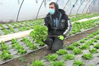 Vremea nesperat de caldă i-a ajutat pe fermieri. Ce culeg din solarii în decembrie