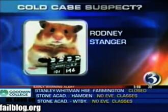 D'ale televiziunii! Hamster, suspect intr-o crima