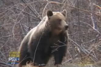 Te vezi la Stirile Pro Tv: Rezervatia LiBEARty-raiul ursilor pensionari II