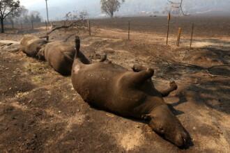 S-au strans milioane de dolari pentru victimele incendiilor din Australia