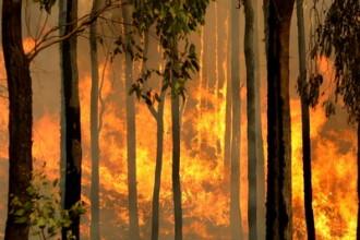 Incendiu devastator la Sibiu! Au ars peste 70 de hectare