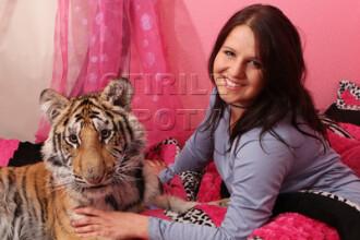 Doarme cu tigrul in pat: 'E ca si cum ai avea un caine'