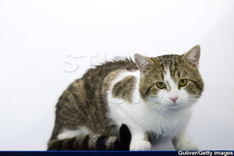 Atentie la animalele de companie comandate de pe internet