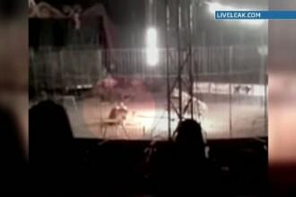 Imagini socante. La un circ din Mexic un tanar dresor a pierit sfasiat de coltii tigrului