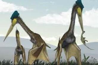 Scheletul unei reptile care a trait in timpul dinozaurilor, gasit in Bazinul Transilvaniei