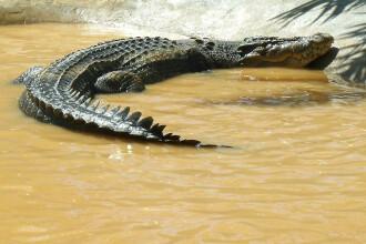 Lolong, cel mai mare crocodil din lume, a murit dintr-o prostie. Obiectul fatal pe care l-a inghitit