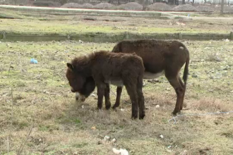 """""""Am gasit 2 animale pe camp, erau ale nimanui"""". Cum au ajuns 2 magari in farfuriile a zeci de oameni"""