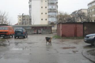O asociatie din Germania sterilizeaza gratuit cainii fara stapan din Timisoara