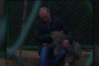 Vladimir Putin, in cusca unui leopard. Ce a facut presedintele Rusiei in prima zi la Soci