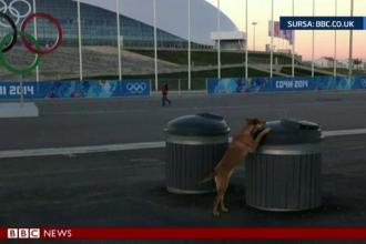 Sportivii de la Soci, impresionati de cainii maidanezi. Fotografiile emotionante ale unui american