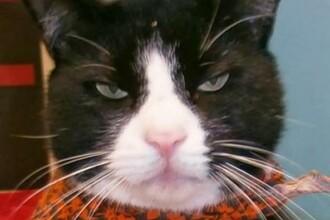 O femeie din New York s-a sinucis dupa ce a pierdut custodia unei pisici maidaneze