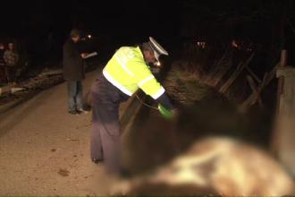 Trei hoti de lemne, prinsi in flagrant in Bistrita. Pe fuga, au gonit calul pana l-au omorat