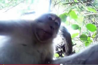 Probleme de copyright pe selfie-ul facut de o maimuta. Wikipedia a lansat o dezbatere, sa decida daca scoate poza de pe site