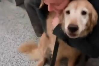 Reactia emotionanta a unui caine, atunci cand isi revede stapana plecata in Afganistan. Patrupedul a inceput sa planga. VIDEO