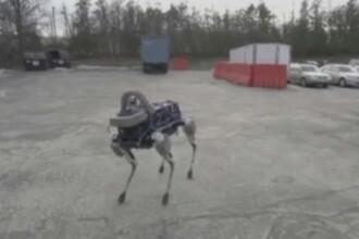 Inginerii americani au creat cainele-robot pentru misiuni dificile de cautare si salvare