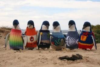 Cel mai batran barbat din Australia tricoteaza pulovere pentru pinguinii raniti. FOTO
