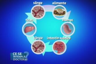 Importanta colesterolului in corpul uman. Care sunt valorile ideale si ce boli pot aparea daca nu este tinut sub control