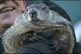 Marmota Phil a prezis o iarna scurta. Ultima data cand s-a intamplat asta, a fost ger si viscol pana in martie