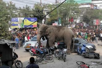 Panica intr-un oras din India dupa ce un elefant a distrus 100 de case. Motivul pentru care a reactionat atat de violent