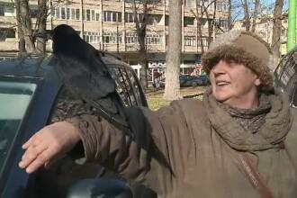 O localnica i-a salvat viata, iar de atunci cioara Coco a devenit mascota orasului Arad.