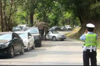 Pagubele facute in 20 de minute de un elefant suparat din China. Imaginile au fost surprinse de martori