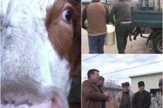 Ideea cu care 230 de fermieri au dat lovitura. Sunt angajati cu carte de munca si au echipamente de ultima generatie