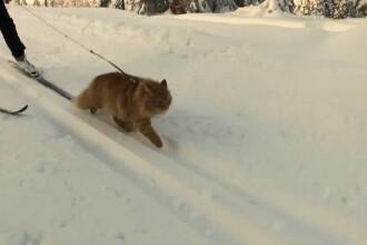Jasper, motanul schior cu o viata mai aventuroasa decat a unui om. Imaginile care i-au adus celebritatea pe internet