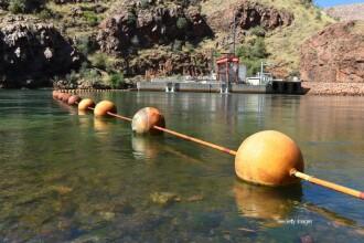 Aparitie surprinzatoare pe malul unui lac din Australia. Aceasta creatura bizara naste speculatii pe internet