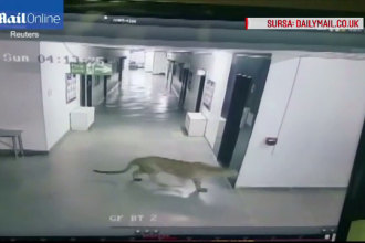 Leopardul care a atacat 5 oameni, intr-o scoala din India, a evadat din nou, dupa ce a ros cusca. Locuitorii sunt ingroziti