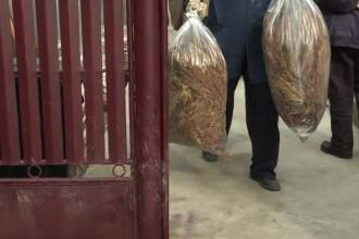 Perchezitii la traficantii de tigari. Sotia sefului retelei sustine ca avea 500 kg de tutun in casa