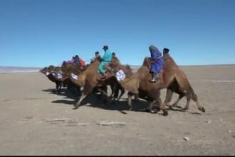 Competitie cu camile in Mongolia. In ce a constat premiul cel mare pentru care s-au luptat sute de copii