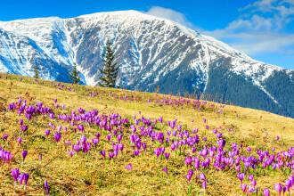 Zona din Romania care ar putea fi transformata in cel mai mare parc national din Europa:
