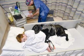 Un caine loial refuza sa se dezlipeasca de prietenul sau, un copil autist, cand acesta este dus la spital. Galerie Foto
