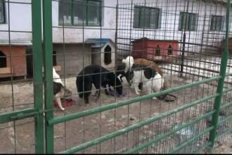 Situatie disperata la padocul de caini al primariei din Braila. Ce se intampla in adapostul unde mor animale in fiecare luna