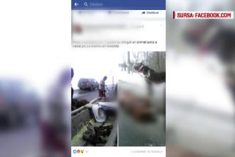 Tanar din Botosani, dosar penal pentru ca si-ar fi exploatat calul pana cand a murit. Martor: