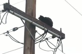 Aventura prin care a trecut o pisica incercand sa prinda o pasare. Cum a fost salvata