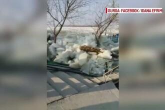 Necazuri nesfarsite pe Dunare. Sloiurile au ajuns pe mal, iar localnicii spun ca n-au mai avut astfel de probleme de 10 ani
