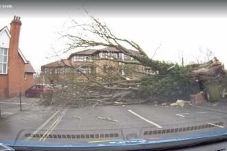 Un arbore masiv s-a prabusit pe drum, chiar in fata masinii sale. Norocul prin care soferul a scapat cu viata. VIDEO