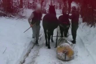 Padurar din Dambovita, atacat cu salbaticie de doi tineri pe care i-a surprins la furat de lemne