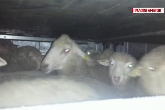 Modul barbar in care sunt transportate animalele in tara si peste hotare.