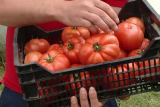 In cautarea gustului pierdut al rosiilor, statul acorda subventii. Ce trebuie sa faca un fermier pentru 3.000 EUR/ an