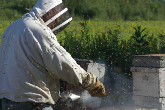 O femeie a fost la un pas de moarte, după ce a consumat miere halucinogenă