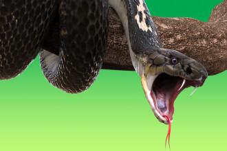 Funcționară suspendată, după ce le-a spus șefilor că 100.000 de dolari lipsă au fost mâncați de un șarpe